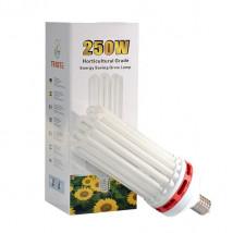 CFL 250W Bloom