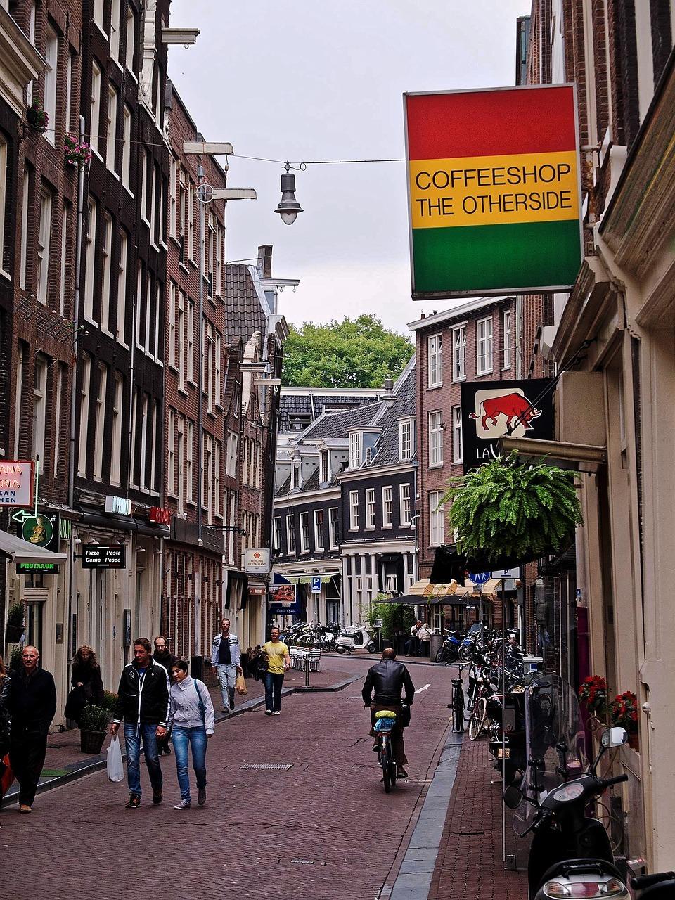 nizozemska konoplja